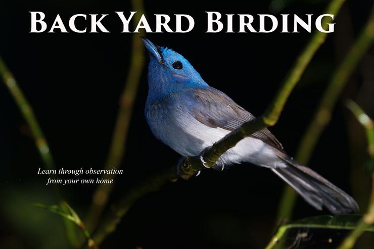 Back Yard Birding